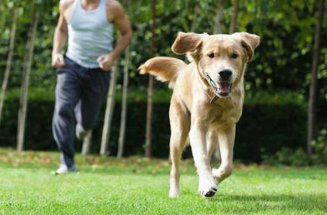 man chasing dog